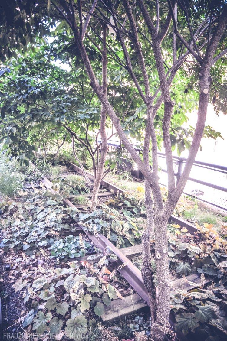 Der High Line Park_Die stillgelegte Hochbahntrasse im Manhattans Westen Bäume und Pflanzen2_Frau Zuckerbrötchen